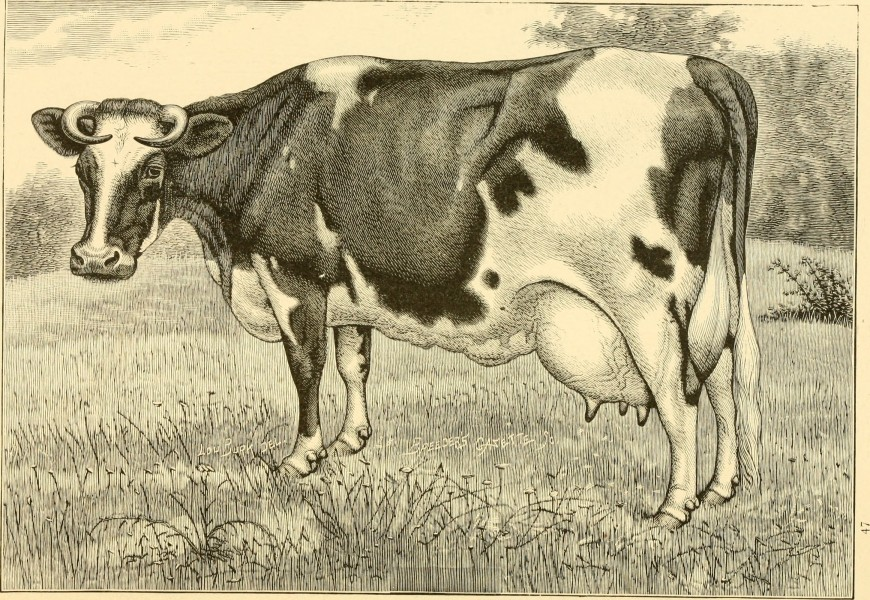 The breeds of live stock, and the principles of heredity (1887) (14758400626)