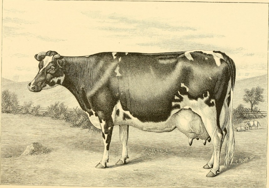 The breeds of live stock, and the principles of heredity (1887) (14758406656)