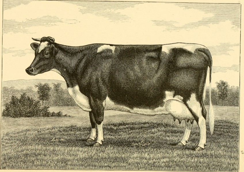 The breeds of live stock, and the principles of heredity (1887) (14758410446)