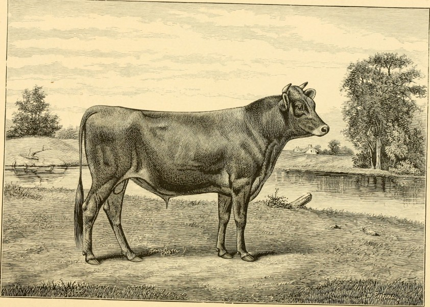 The breeds of live stock, and the principles of heredity (1887) (14758431936)