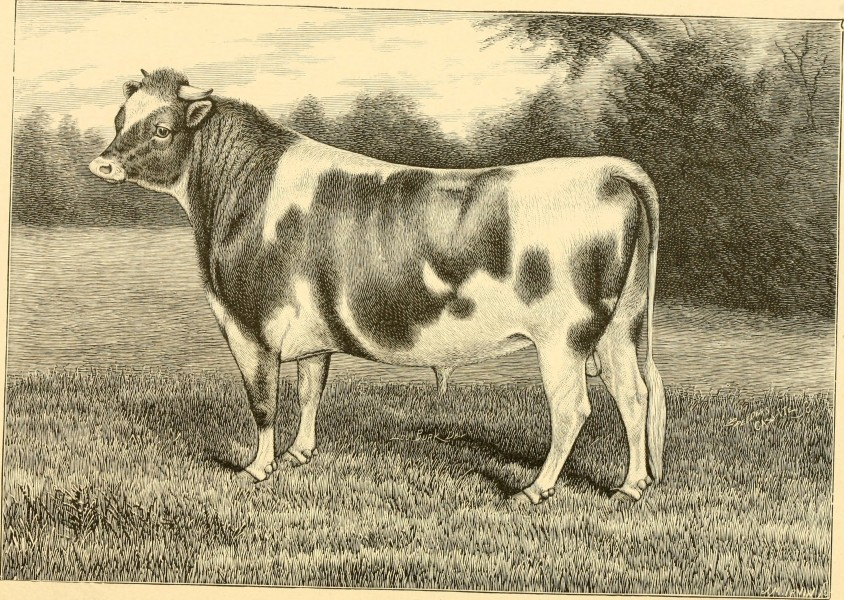 The breeds of live stock, and the principles of heredity (1887) (14758438896)