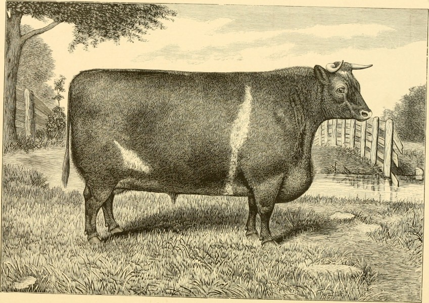 The breeds of live stock, and the principles of heredity (1887) (14778123921)