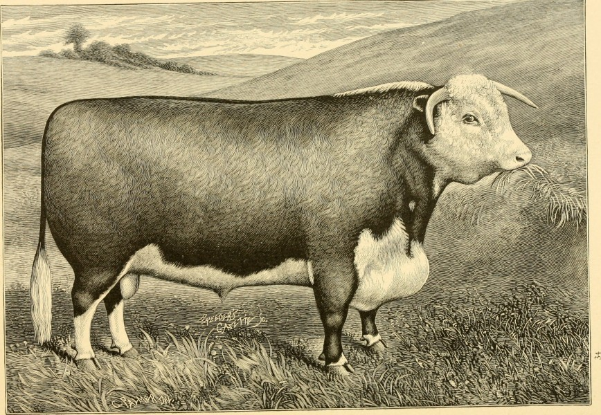 The breeds of live stock, and the principles of heredity (1887) (14778132531)