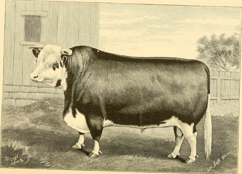 The breeds of live stock, and the principles of heredity (1887) (14778146171)