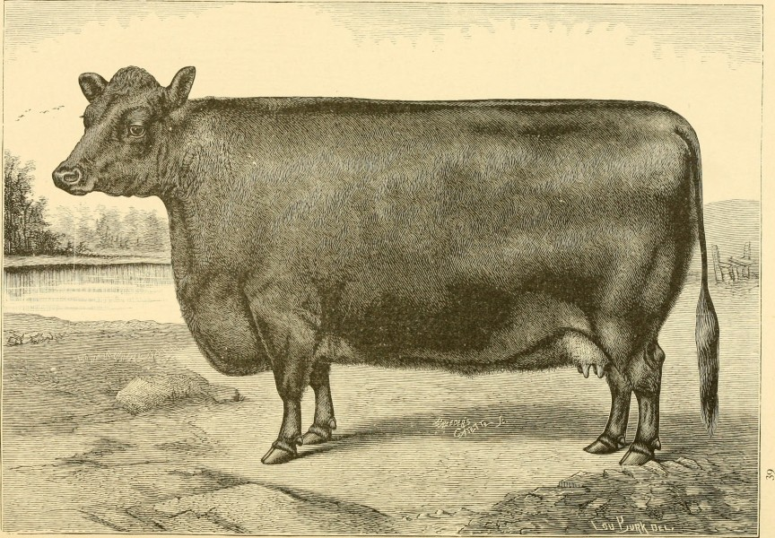 The breeds of live stock, and the principles of heredity (1887) (14778183241)