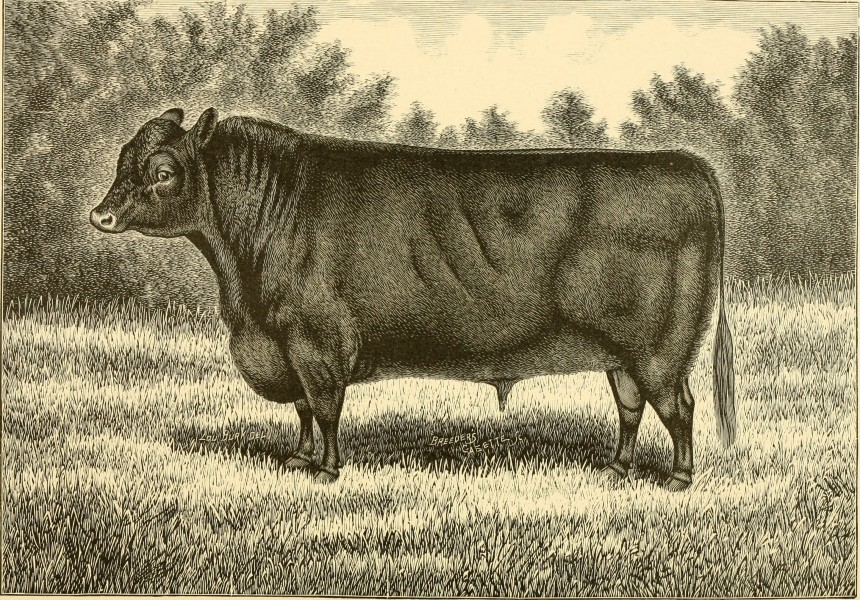The breeds of live stock, and the principles of heredity (1887) (14778187161)