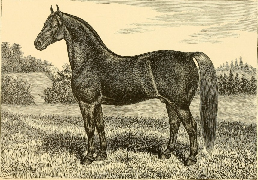 The breeds of live stock, and the principles of heredity (1887) (14778764584)