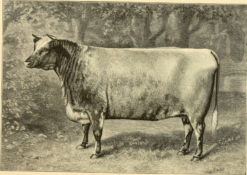 The breeds of live stock, and the principles of heredity (1887) (14778855994)