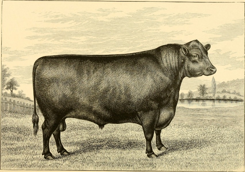 The breeds of live stock, and the principles of heredity (1887) (14778972394)
