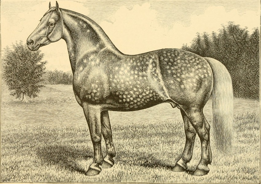 The breeds of live stock, and the principles of heredity (1887) (14780856892)