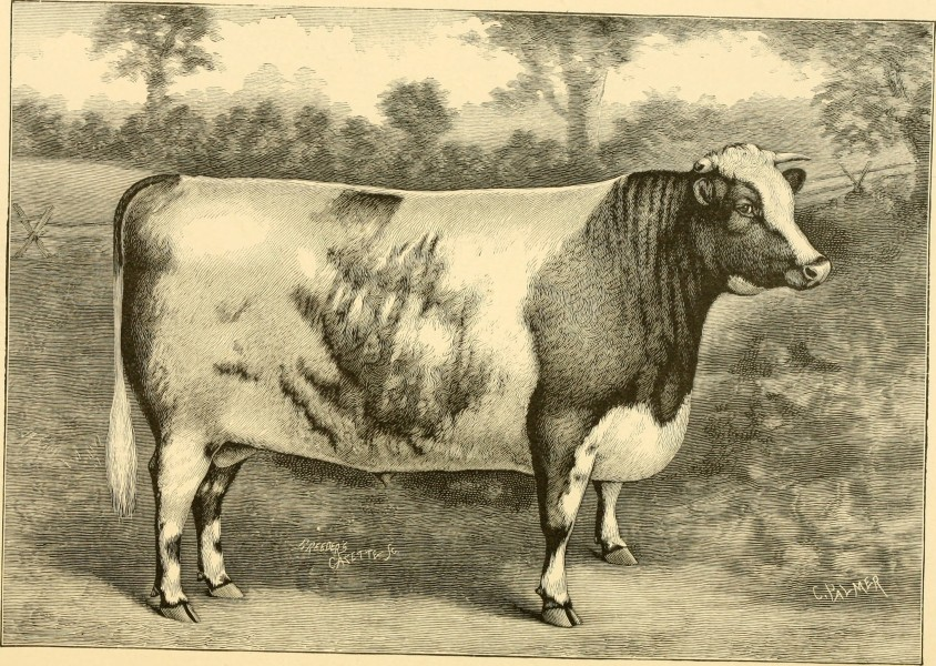 The breeds of live stock, and the principles of heredity (1887) (14780917812)