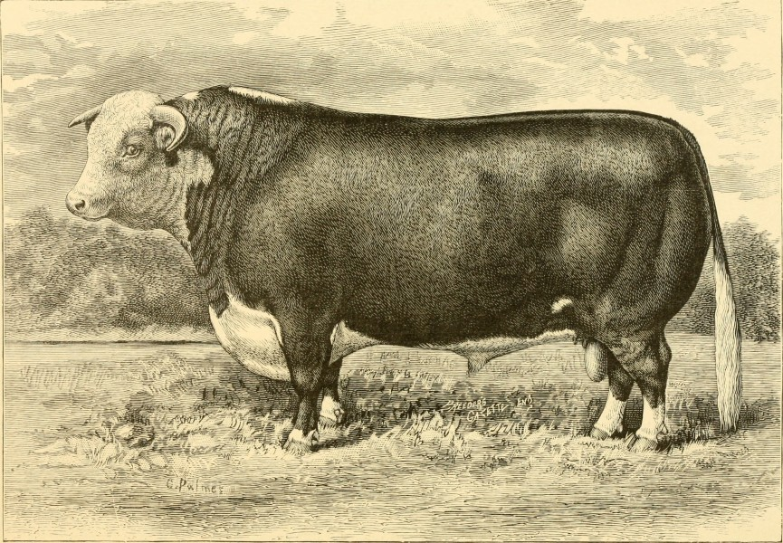 The breeds of live stock, and the principles of heredity (1887) (14780923892)