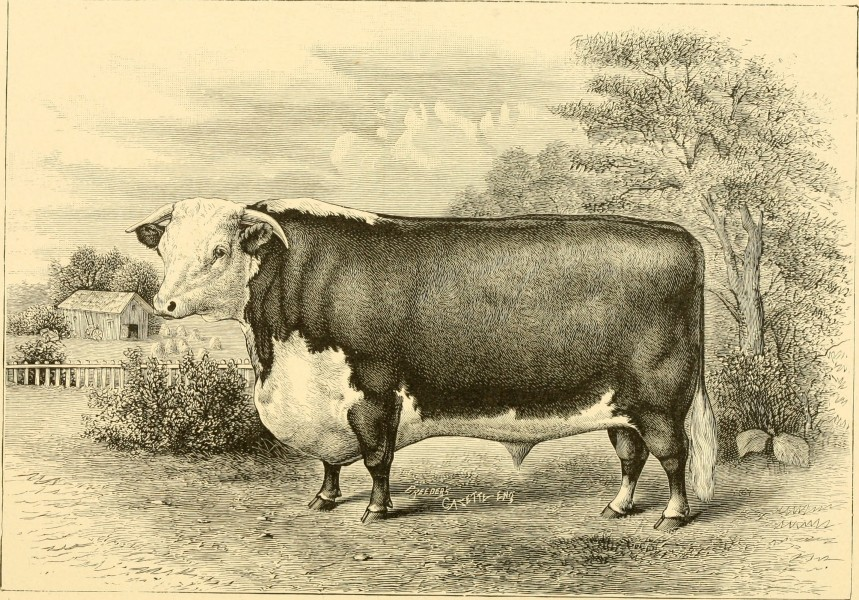 The breeds of live stock, and the principles of heredity (1887) (14780927562)