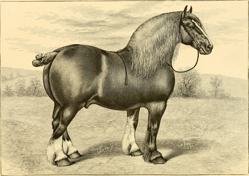 The breeds of live stock, and the principles of heredity (1887) (14781139805)