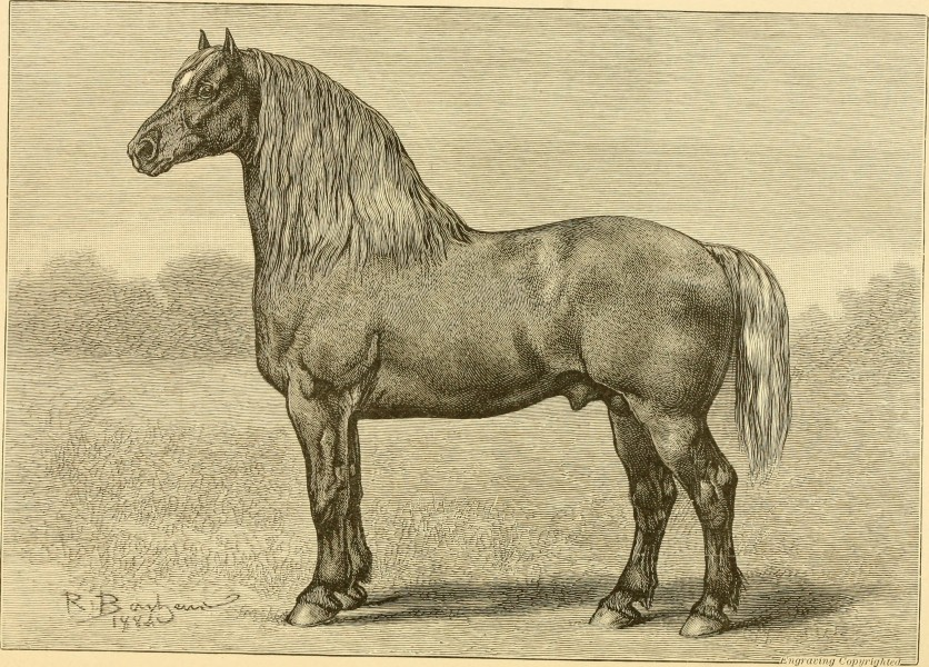 The breeds of live stock, and the principles of heredity (1887) (14781209695)