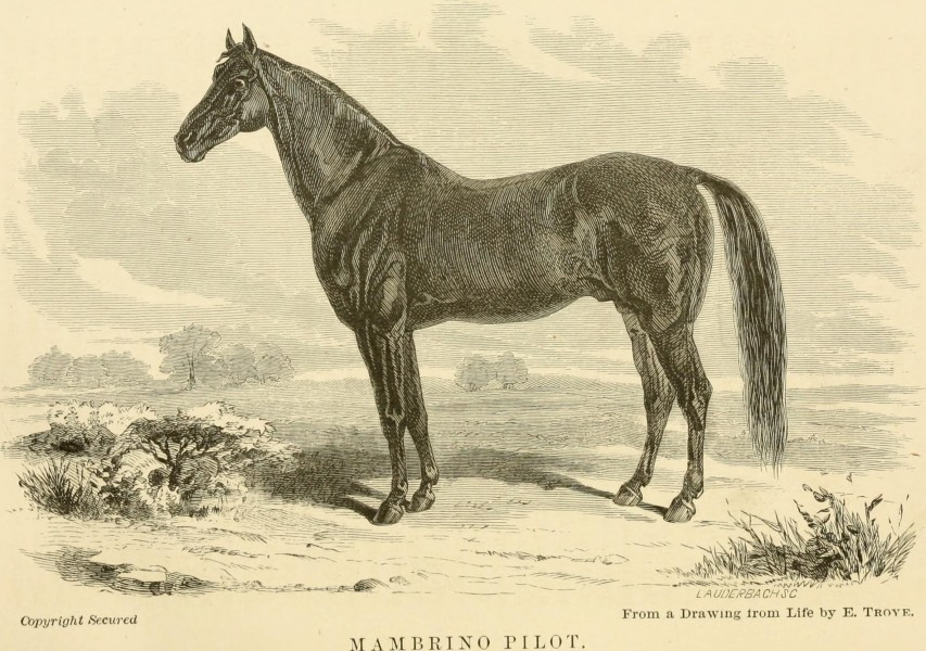 The horse in the stable and the field - his management in health and disease (1869) (14761404896)