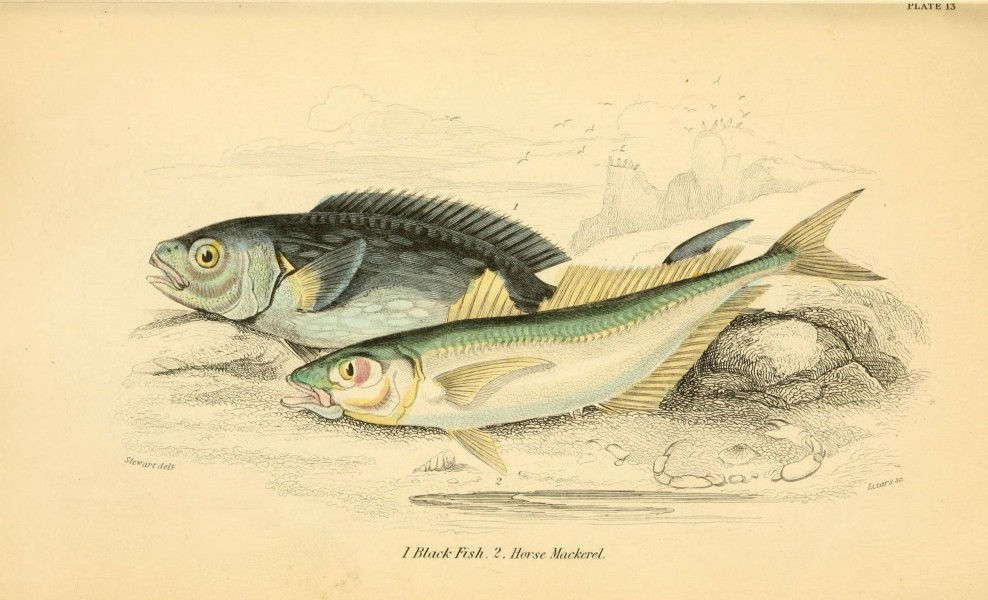 The natural history of British fishes (6073108330)