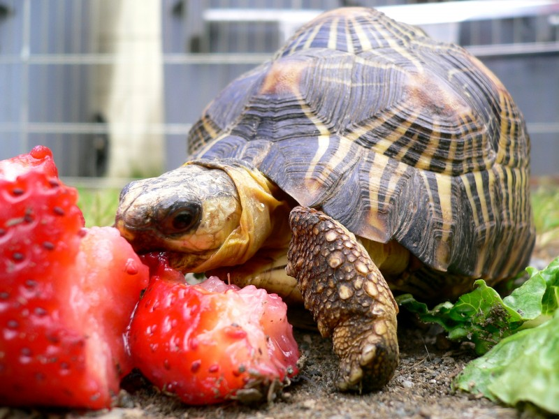 Turtle Lunch