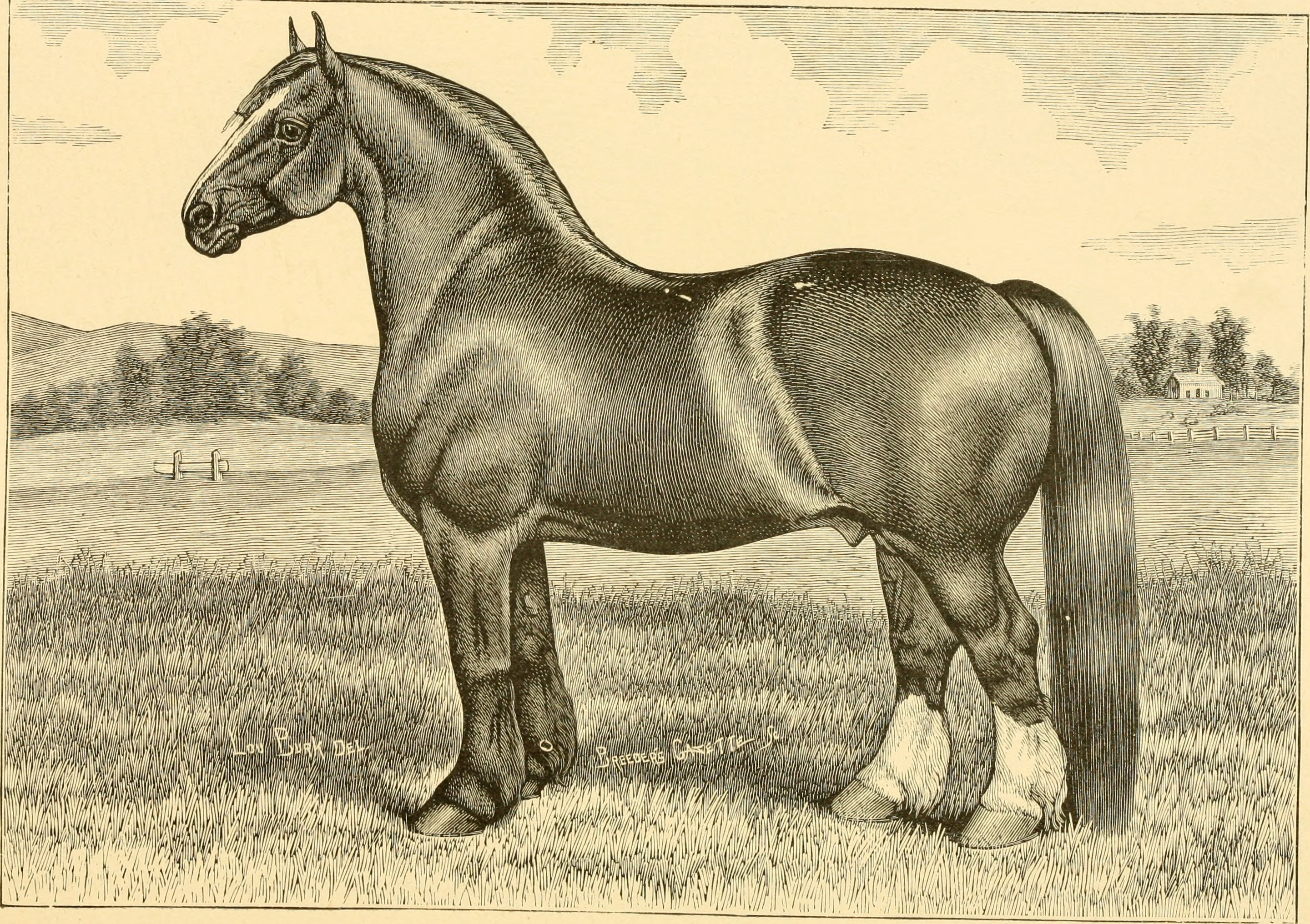 The breeds of live stock, and the principles of heredity (1887) (14594431220)