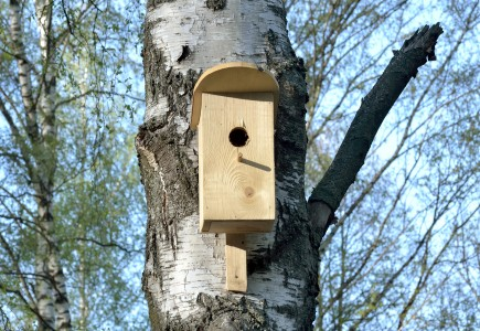 Bird house in Korolyov, Moscow Oblast