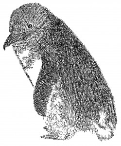 Little Blue Penguin drawing