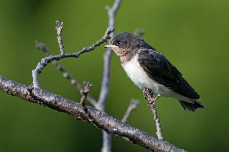 Small bird perching on a branch