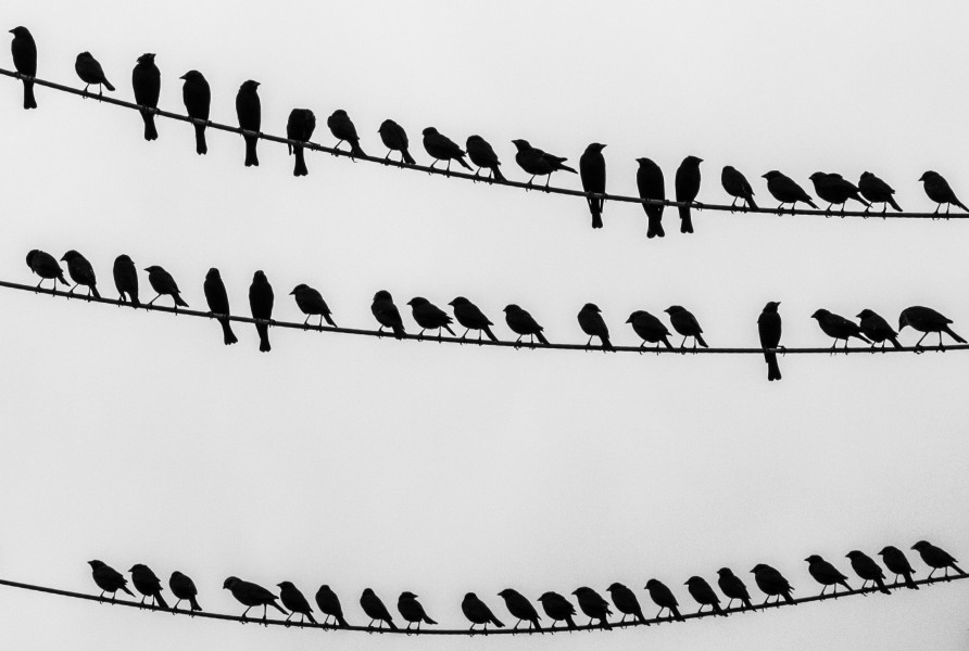 Birds on the wire - crop right