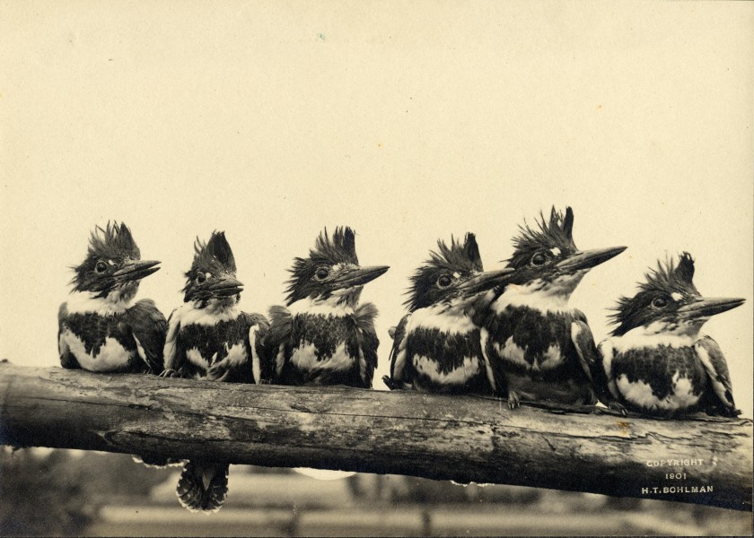 Six of the frowzy-headed Fishers