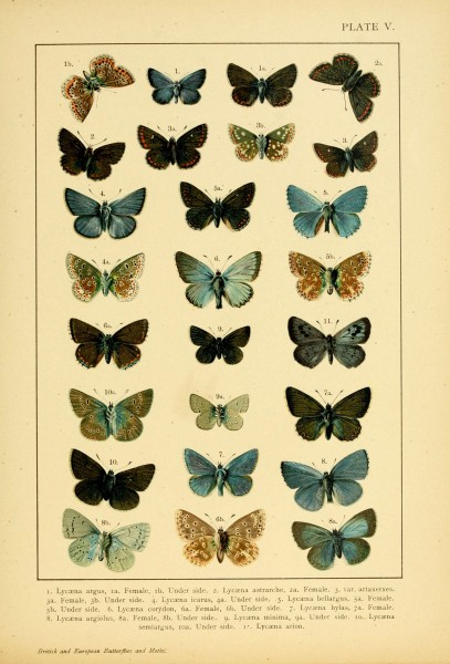 British and European butterflies and moths (Macrolepidoptera) (Plate V) (6466288855)