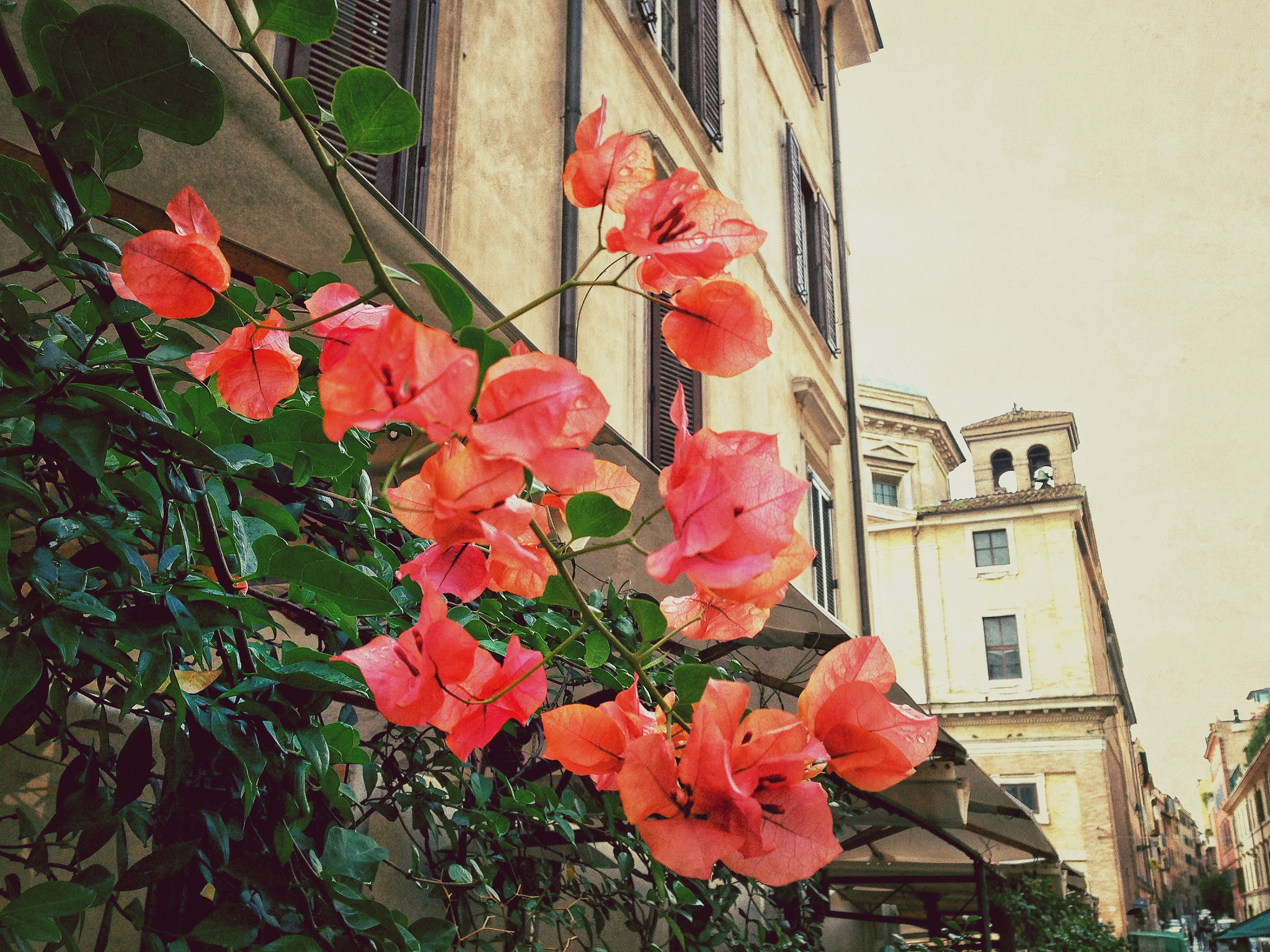 Flowers in Rione Monti Rome