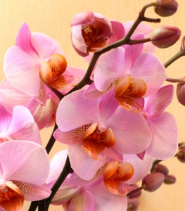 God's creation: pink orchids, photo 1