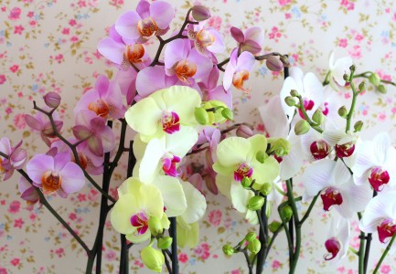 pink, yellow and white orchids, photo 1