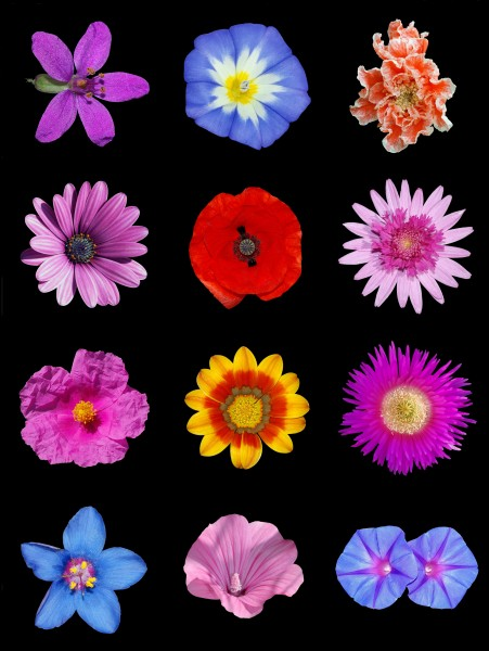 Colored flowers a