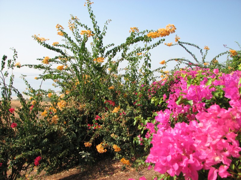 The Mount of Beatitudes, Israel, photo 10