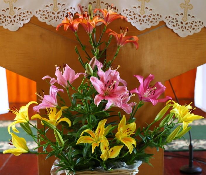 Pink, yellow and orange lily flowers