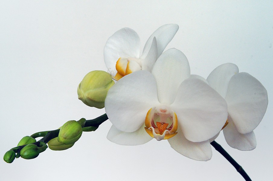 Orchids color (4584815362) (2)
