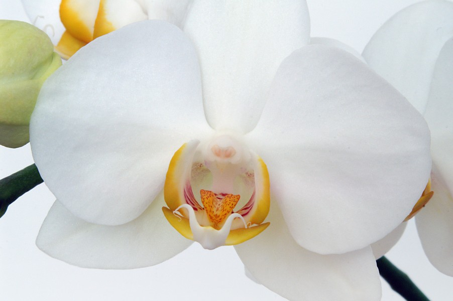 Orchids color II (4584817710) (2)