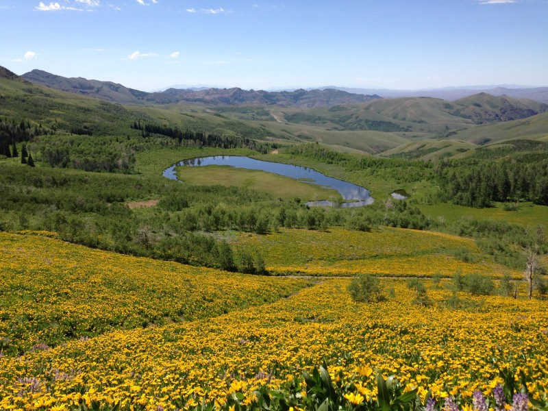 Ponds and wildflowers in Copper Basin near Coon Creek Summit in the Humboldt-Toiyabe National Forest on June 28 2013