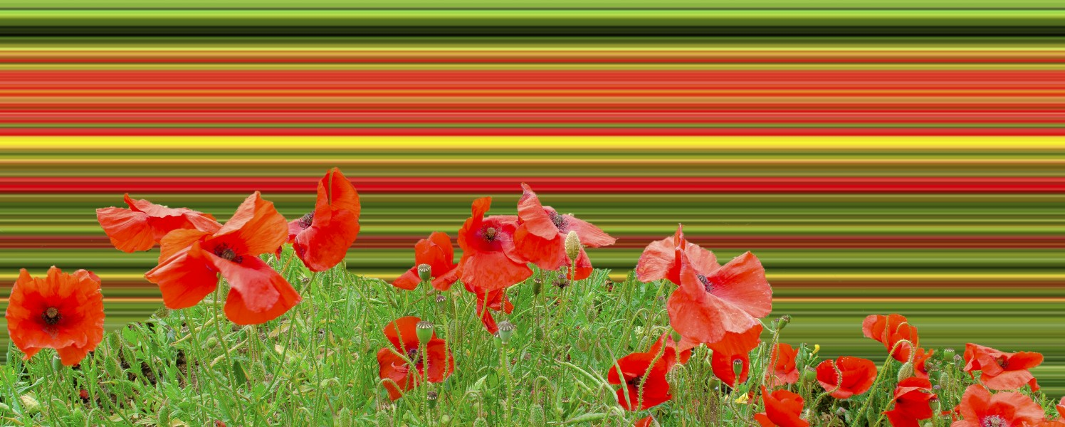 Poppy field overload