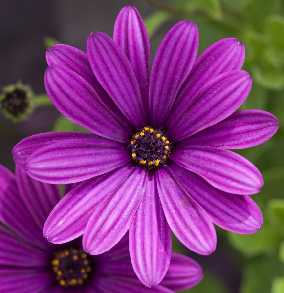 Purple flower (4764445139)