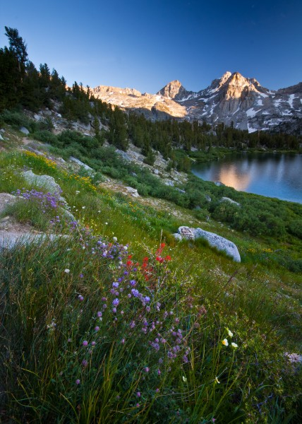 Rae Lakes Wildflowers II (6191188206)