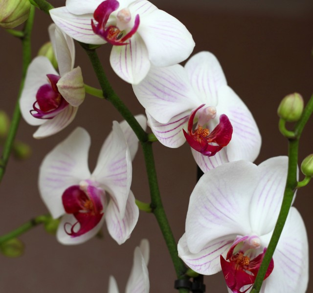 beautiful flowers created by God: white orchids, photo 3