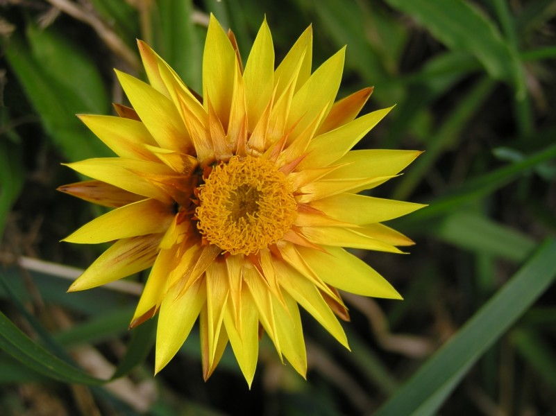Yellow - orange flower