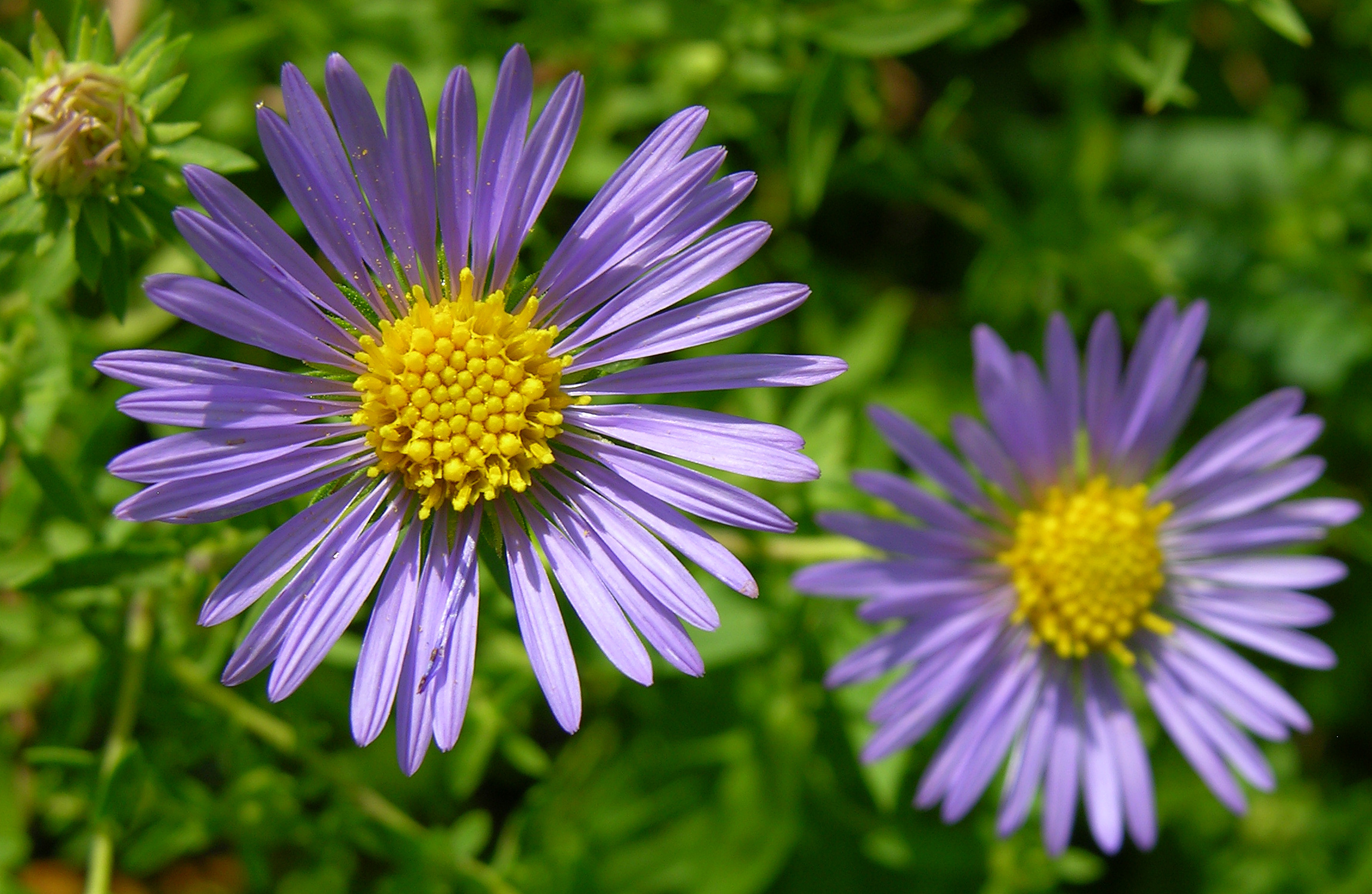 Unidentified Purple and Yellow Flowers 2300px