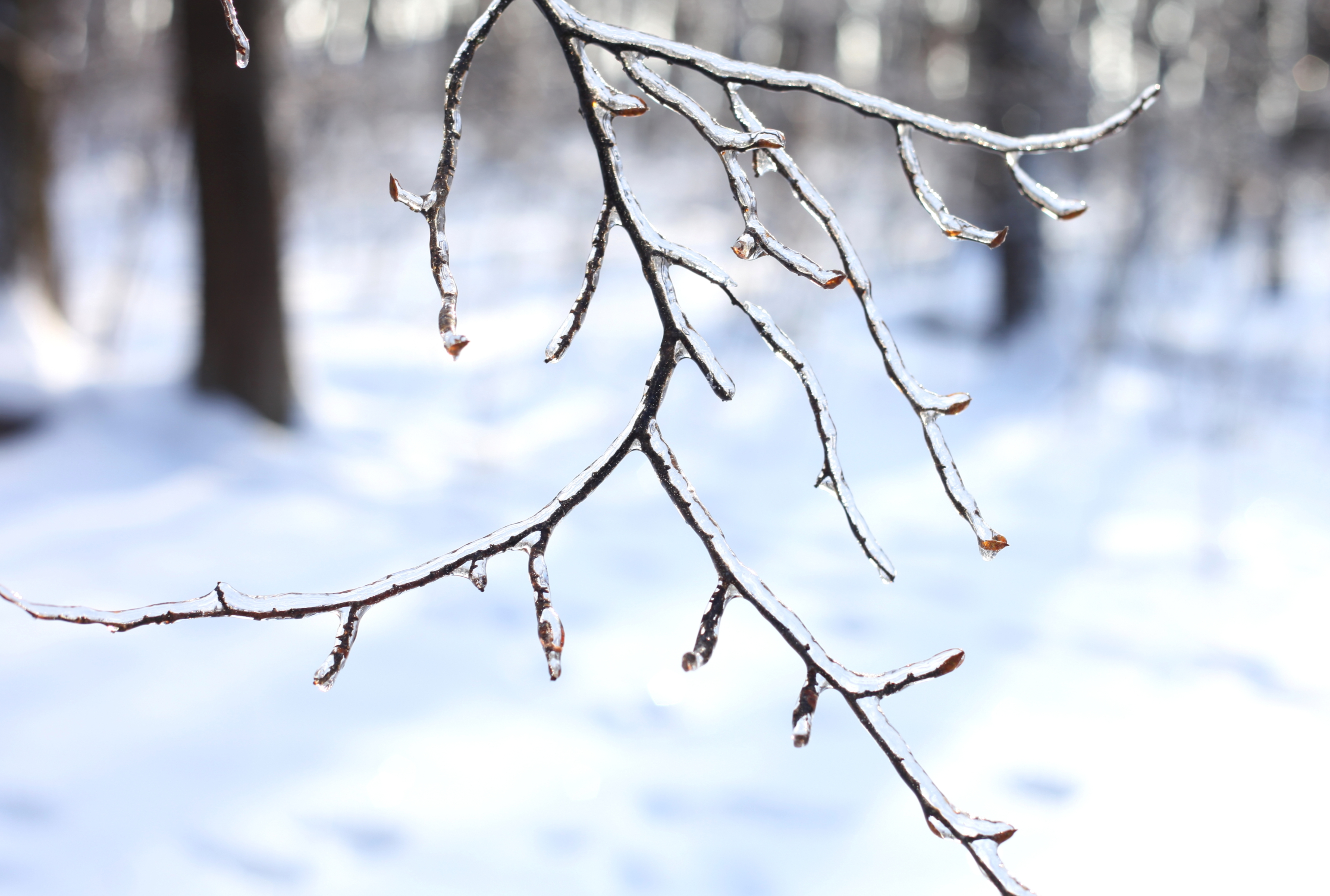 a branch covered with ice, photo 3