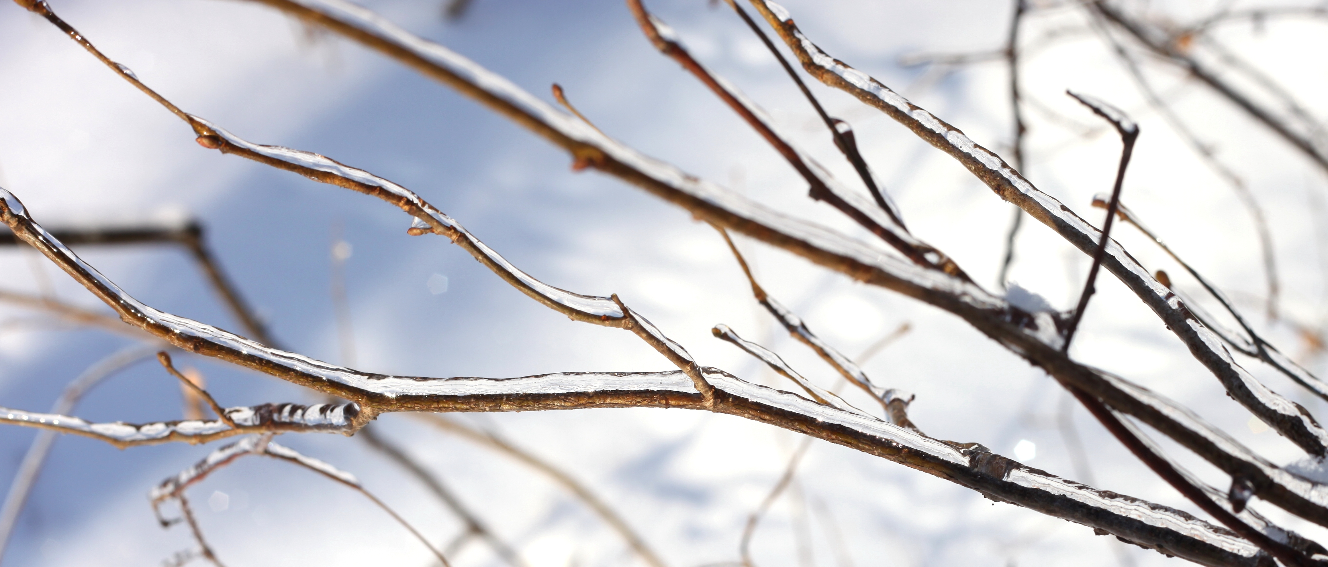 branches covered with ice, photo 1