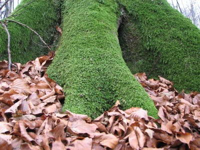 Tree trunk near the root covered with moss, picture 3