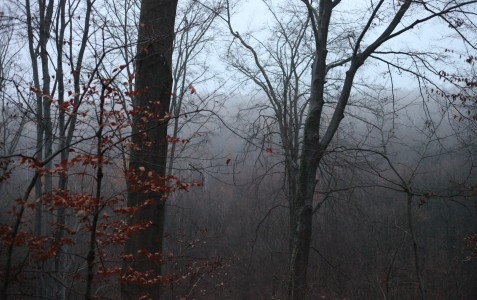 fog in the forest at nightfall in November in Lviv region, Ukraine, photo 1