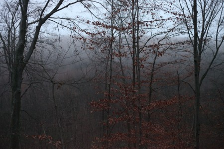 fog in the forest at the dusk, November, Lviv region, Ukraine, photo 2