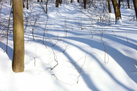 a landscape of snowy forest with long shadows